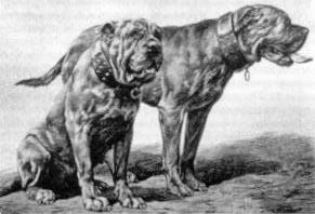 Бьюти и Буфало
