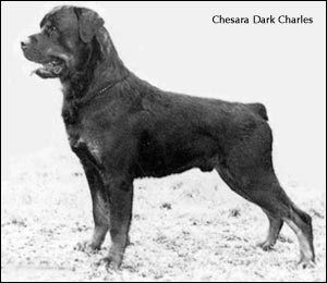 Chesara Dark Charles